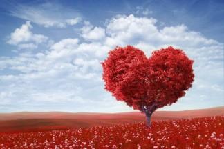 Coeur dans champ